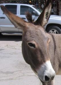 Ass=Donkey