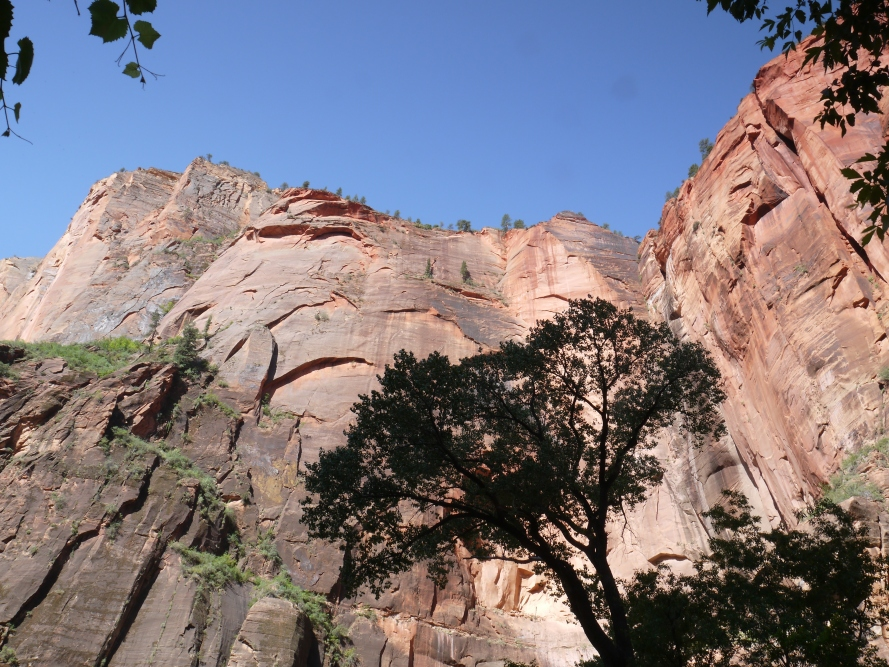 Looking straight up the canyon walls, near the River trail.